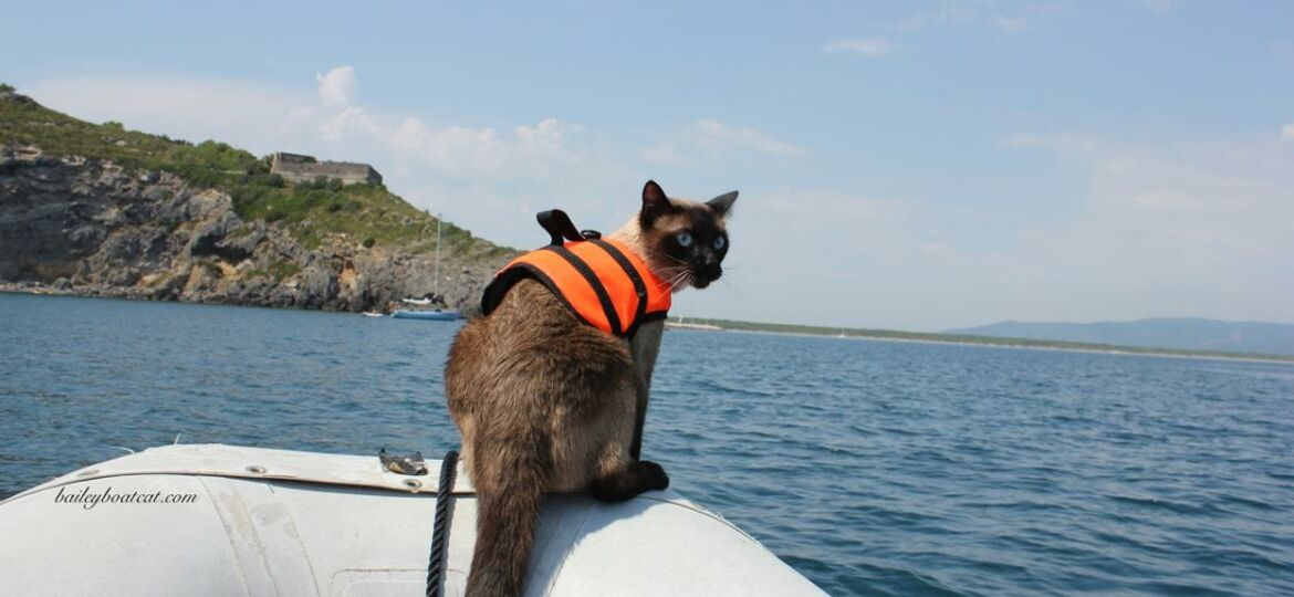 Sailing with a cat