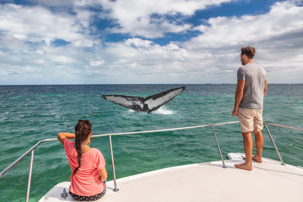 couple watching blue whales