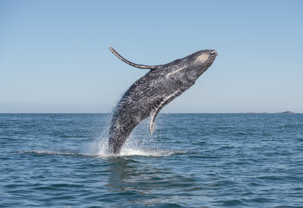 blue whale watching